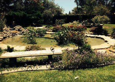 pond after 19